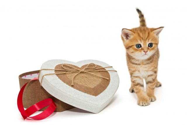 easy diy gifts for cats