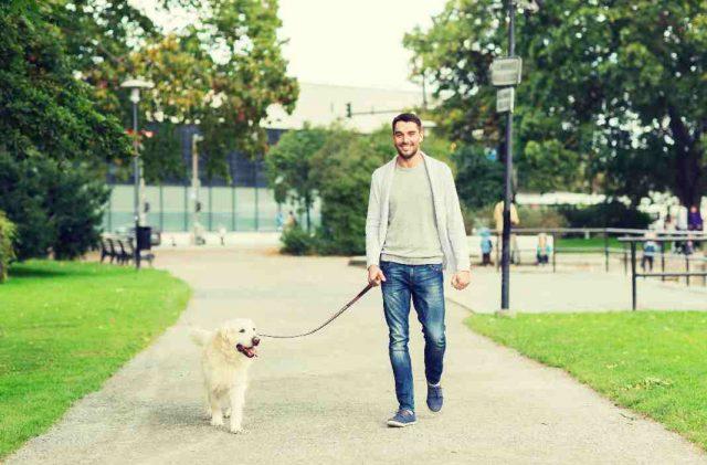dog walker in Melbourne florida
