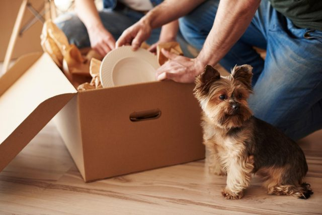 relocation as problem to surrender pet