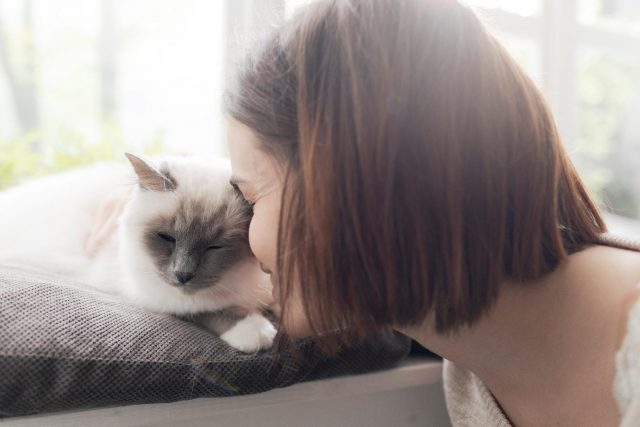 cat sitter near me