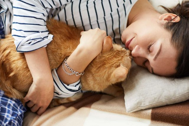 reasons your cat needs a cat sitter