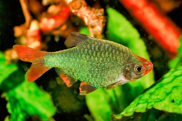 choosing fish for starter fish tank