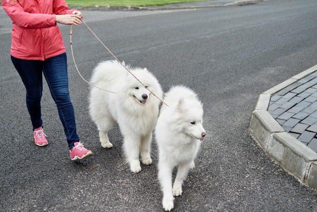 daily dog walker in melbourne, fl