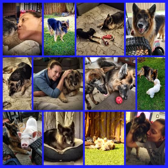 in loving memory of our GSD client
