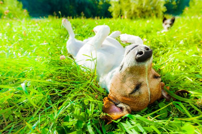 4 Spring Safety Tips for Brevard County Pets