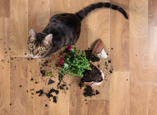 what indoor plants are safe for cats in brevard county
