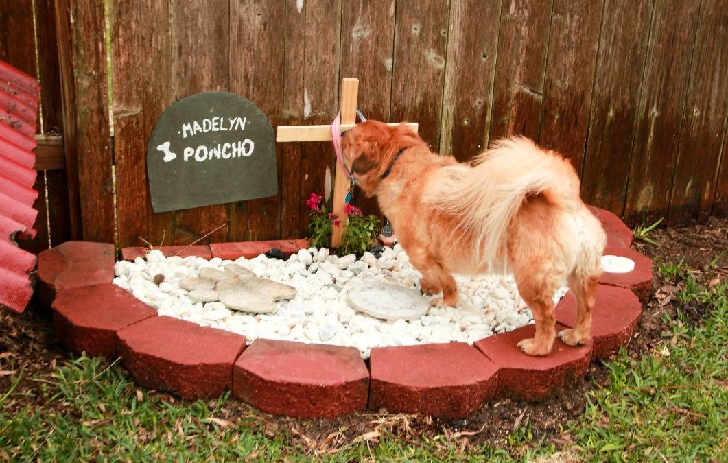 Navigating & Providing End-of-Life Care for your Pet