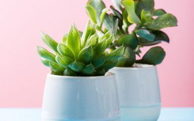 7 Indoor Plants That Are Safe for Pets in Brevard County, Florida