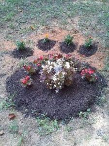 home burial for dog
