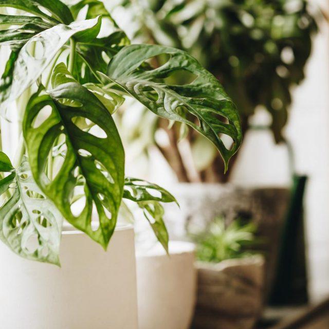 safe indoor plants for pets