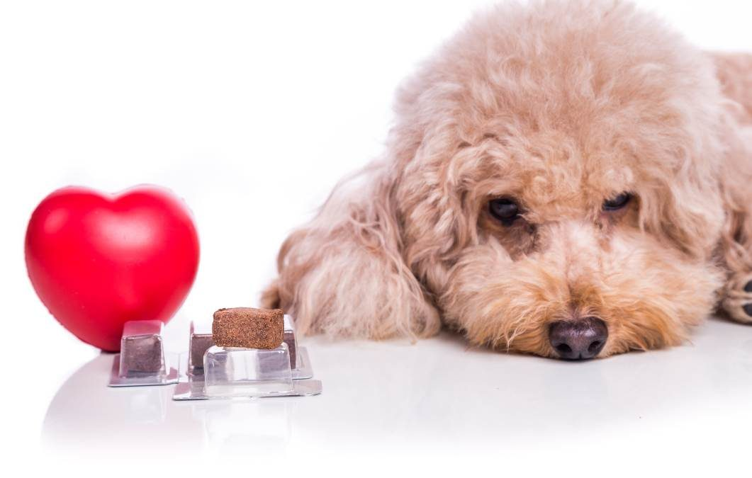 Why Year-Round Heartworm Prevention Is Key for Dogs and Cats