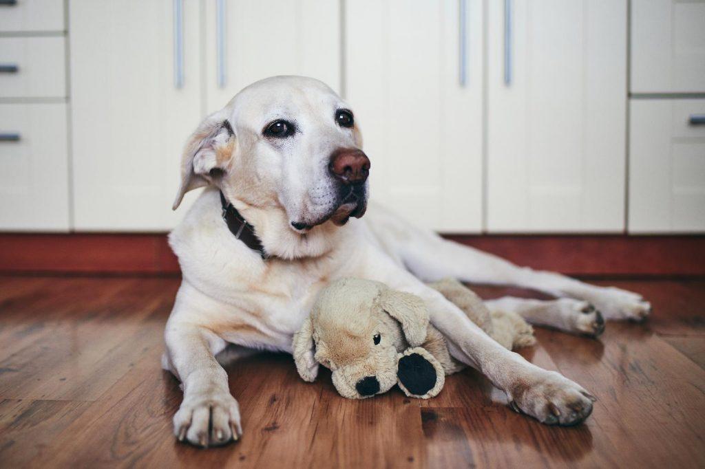 leaving older dog at home