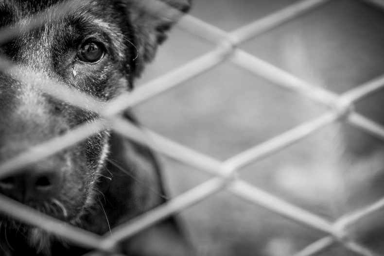 5 Ways To Help Your Local Brevard County Animal Rescue