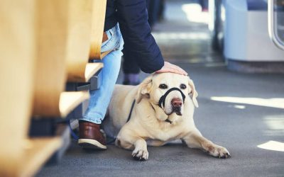 how to keep your dog calm in public