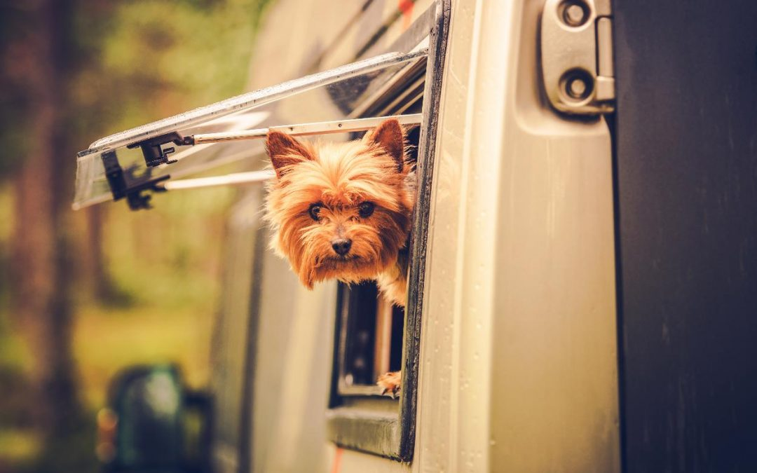 Traveling With a Dog: Do I Take Him With Me or Leave Him at Home?