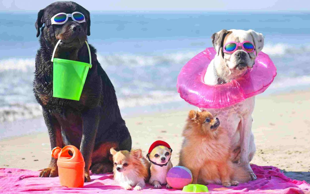 3 Summer Safety Tips for Florida Pets