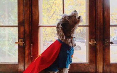 10 Mind-Blowing National Dog Day Facts