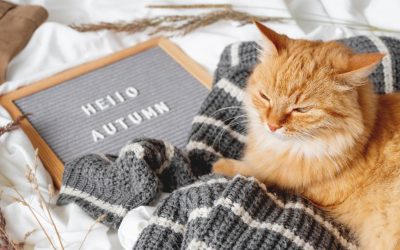 4 Fall Health & Safety Tips for Florida Pets