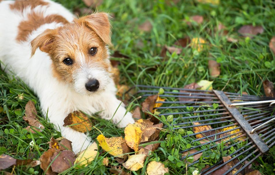 health and safety tips for pets in Fall