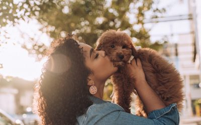 Top 10 Must-Have Items for New Pet Parents