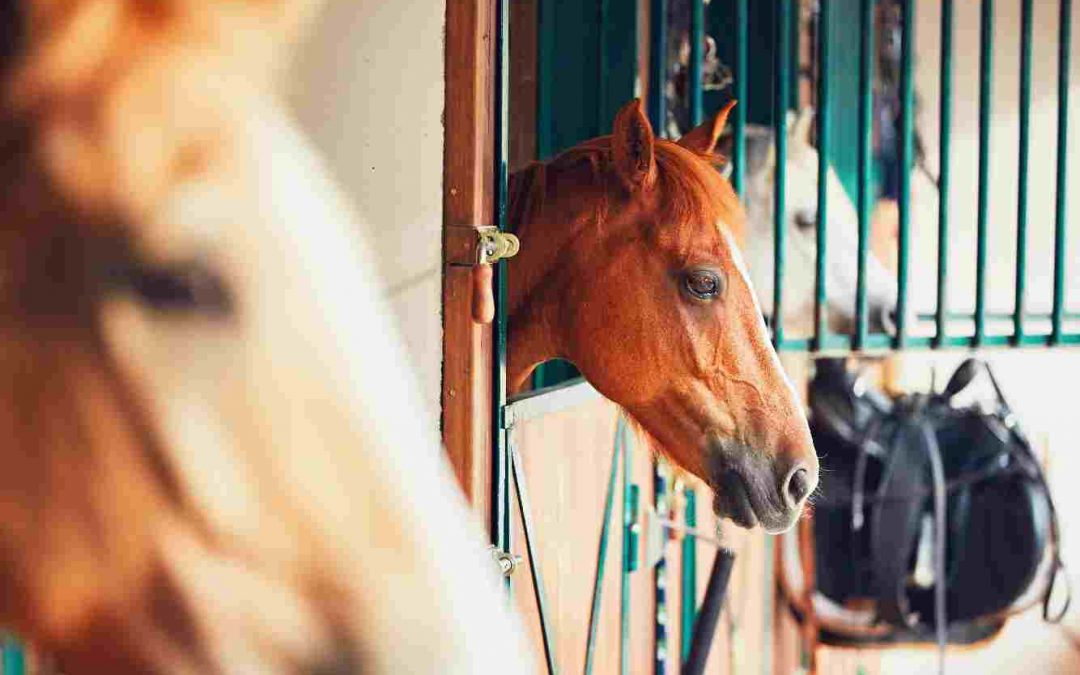 No Horsing Around: 7 Tips For Selecting Your Family's First Horse