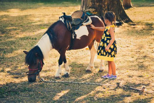 getting a family horse for a pet