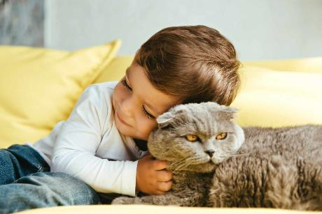 kids with scottish fold cats