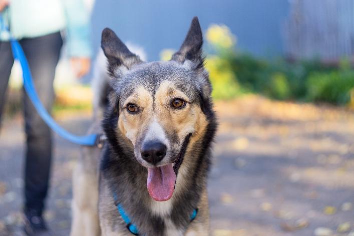Rain or Shine: Dog Walking Essentials in Brevard County