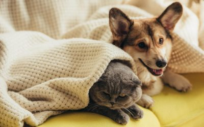 choosing a dog or cat for pet