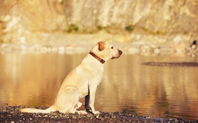 training your dog to recall