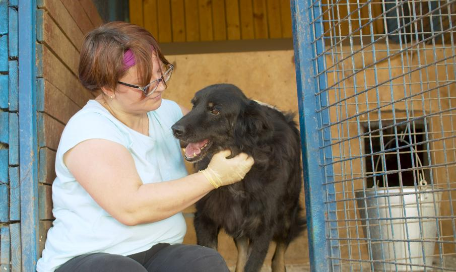 5 More Ways to Help Your Local Animal Rescue