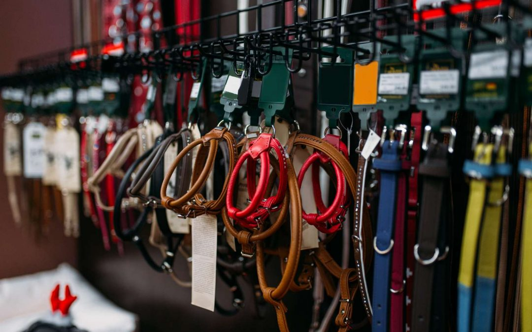 Choosing the Right Lead or Leash For Your Dog