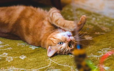 ways to stimulate and engage your feline cat companion