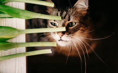 prevent hairballs in cats