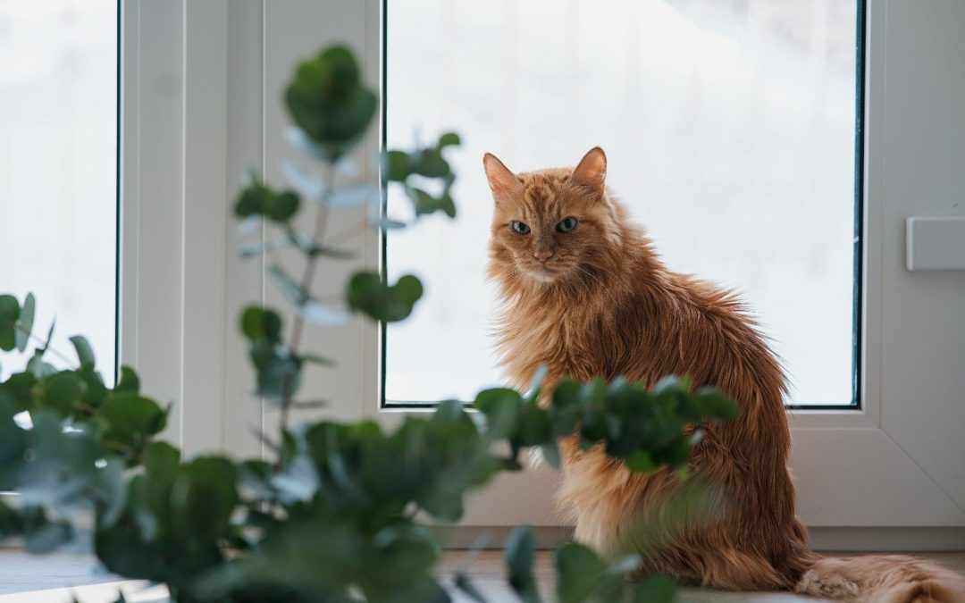 Silver Cats: Caring for your Senior Feline