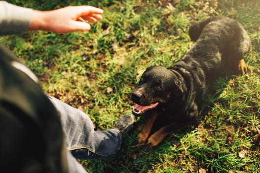 5 Important Commands That You Should Teach Your Dog