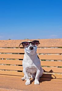 dog flu canine influenza vaccine requirement