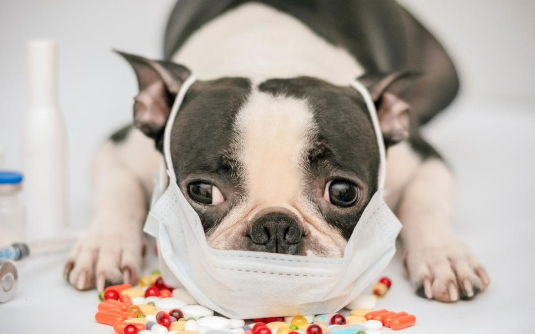 What You Must Know about the Dog Flu & Our Vaccination Requirement